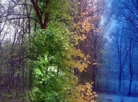 4 saisons dans une photo 03