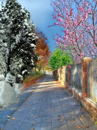 4 saisons dans une photo 11