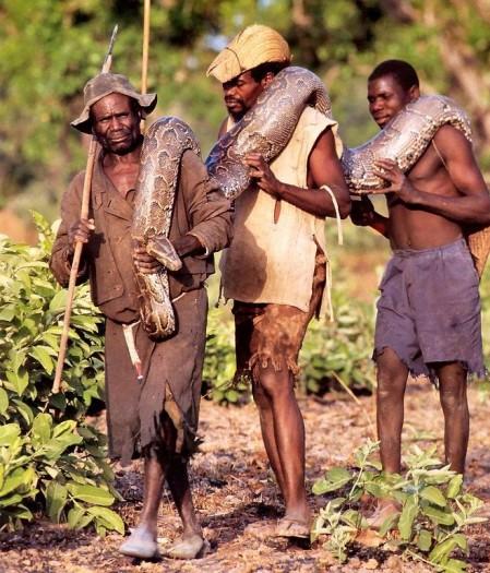 01 - Comment attraper un python