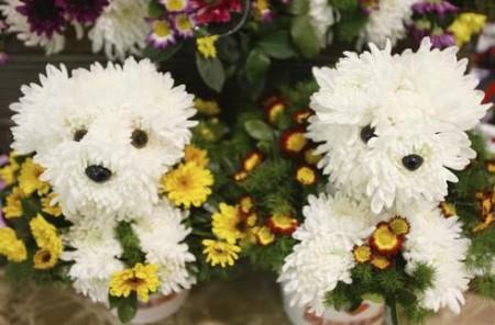 02 - Des chiens faits de fleur - Flower dogs