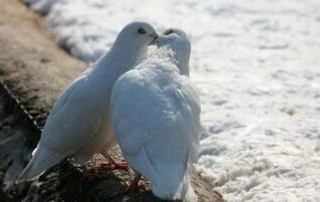 http://www.boobaan.fr/wp-content/uploads/2010/02/01-Des-baisers-passionnes.jpg